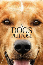 Movie Filter - A Dog`s Purpose - Date: 5/2/2017